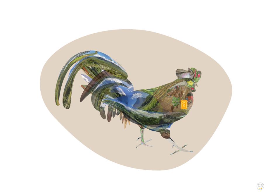 Coq au Heiva - I am the king - copyright