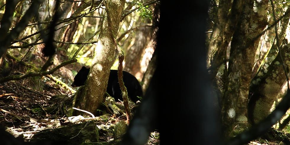 Black Bear Forest | 黑熊森林 / LEE Hsiang-Hsiu | 李香秀