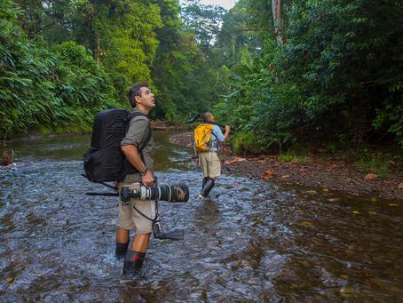 """""""Florestas Animais"""" estreia no Animal Planet em toda América Latina."""