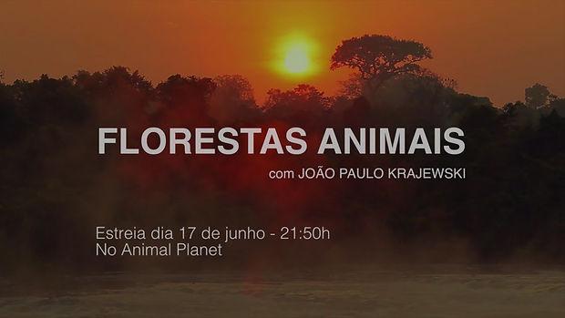 chamada_florestas.jpg