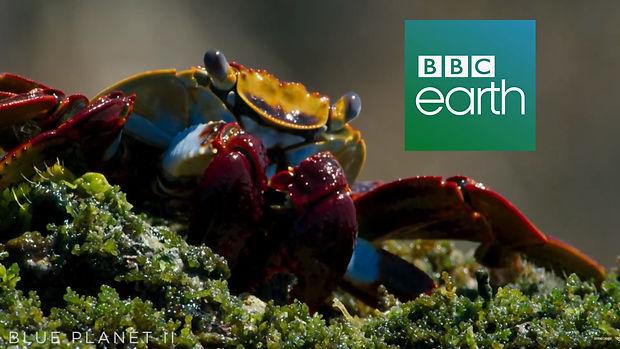 bbc banner.jpg