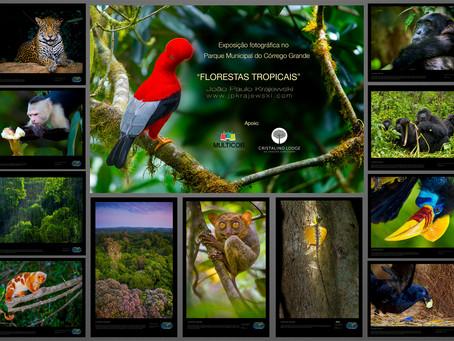 """Exposição fotográfica ao ar livre """"Florestas Tropicais"""" em Florianópolis – SC"""