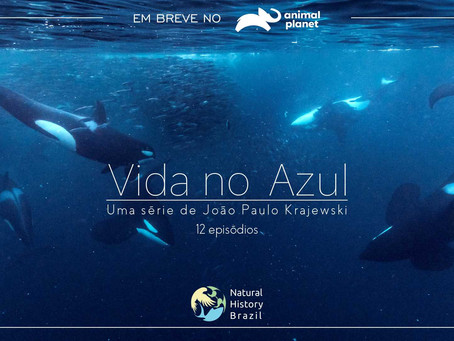 New Series premieres on Animal Planet Brazil: Vida no Azul