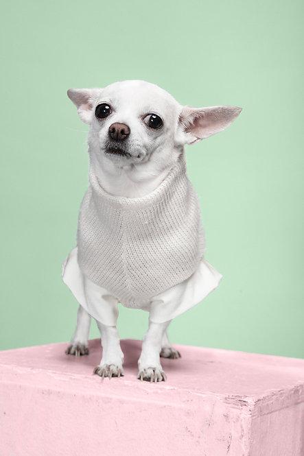 Maglioncino in ortica per cani