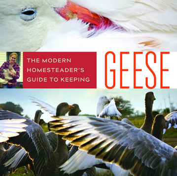 """Introducing """"A Modern Homesteader's Guide to Keeping Geese"""""""