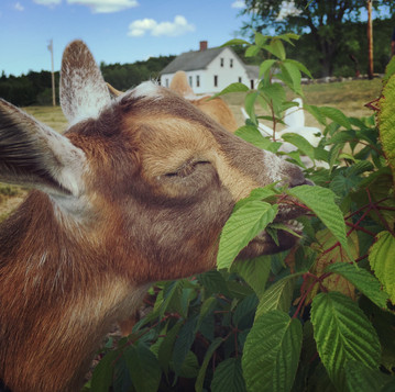 Permaculture Pets