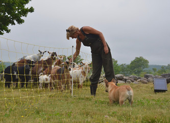 Rotational Grazing with Goats & Pigs