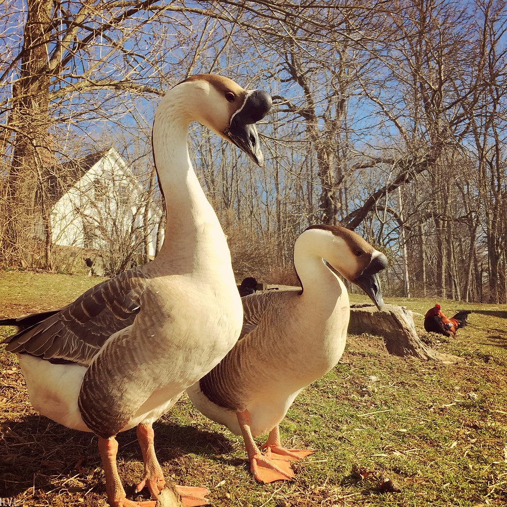 Lady Goose and Ashley