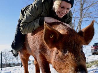 Choices for Breeding Livestock on the Small Farm