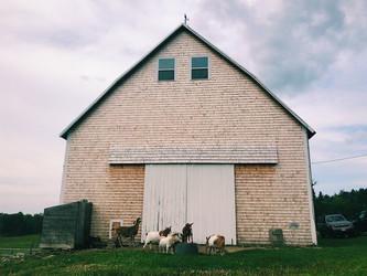 A Few Farm Updates