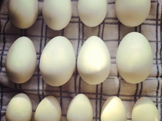 How to Use Goose Eggs