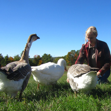 Treats for Geese