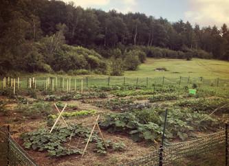 Garden Harvests in July
