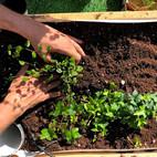 גידול בהצלחה של צמחים בבית