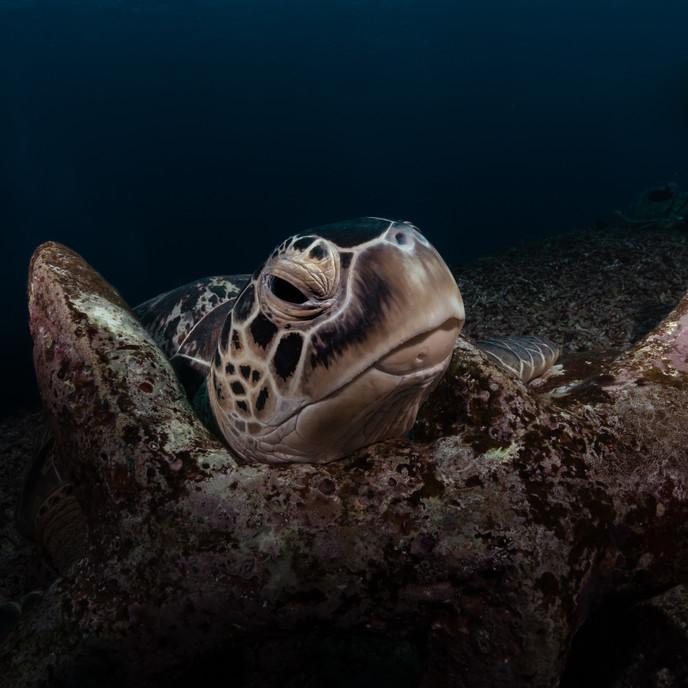 Turtleportrait (1 of 1).jpg