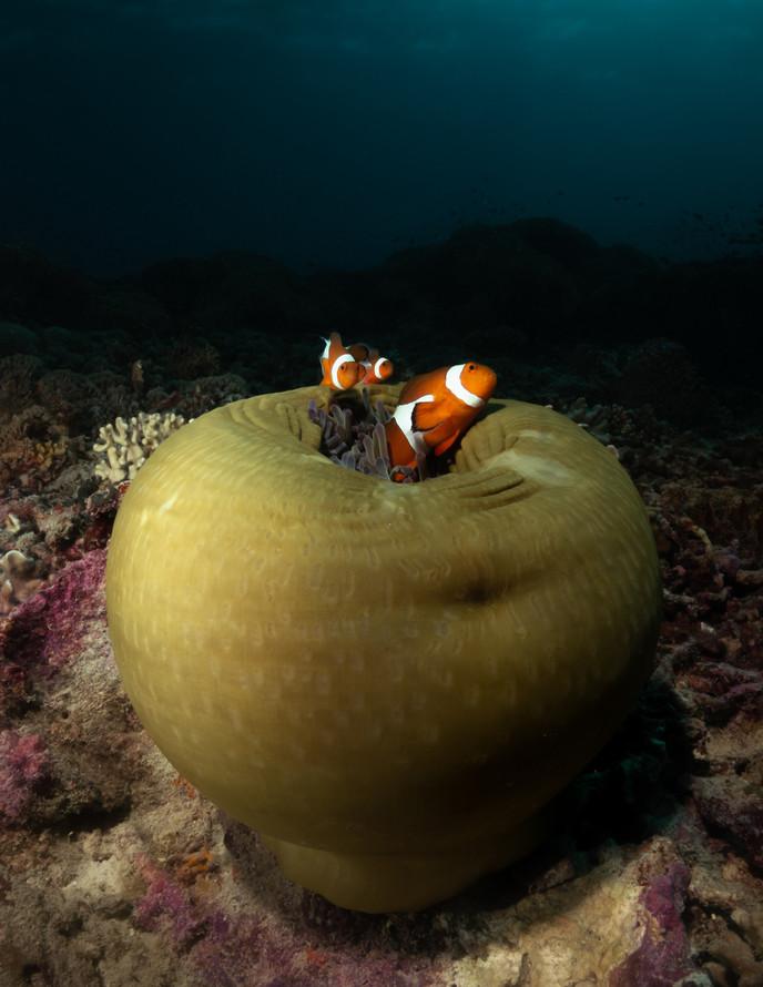 Nemo (1 of 1)-2.jpg