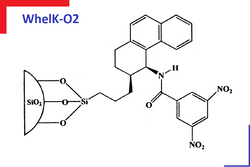 Whelk-02