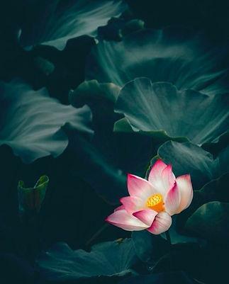 Le Monde Spa Flower.jpeg
