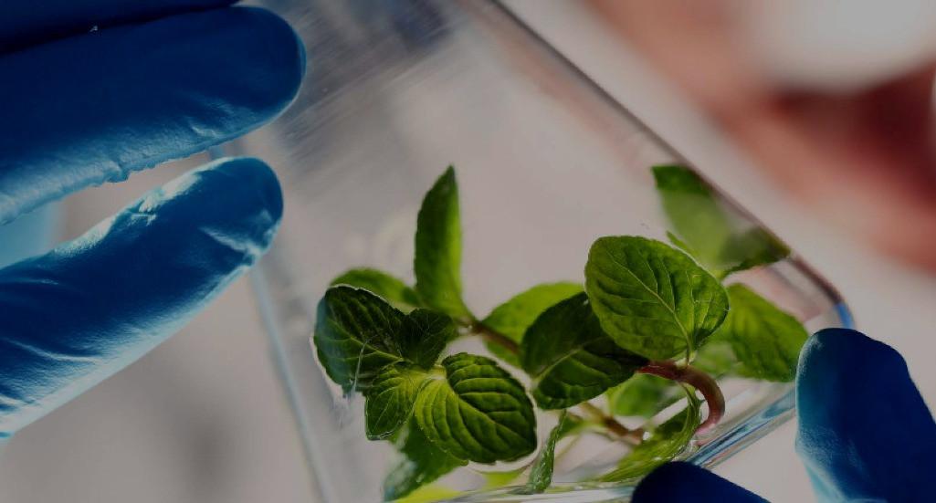 biotechnologie-studieren-pflanze-reagenz