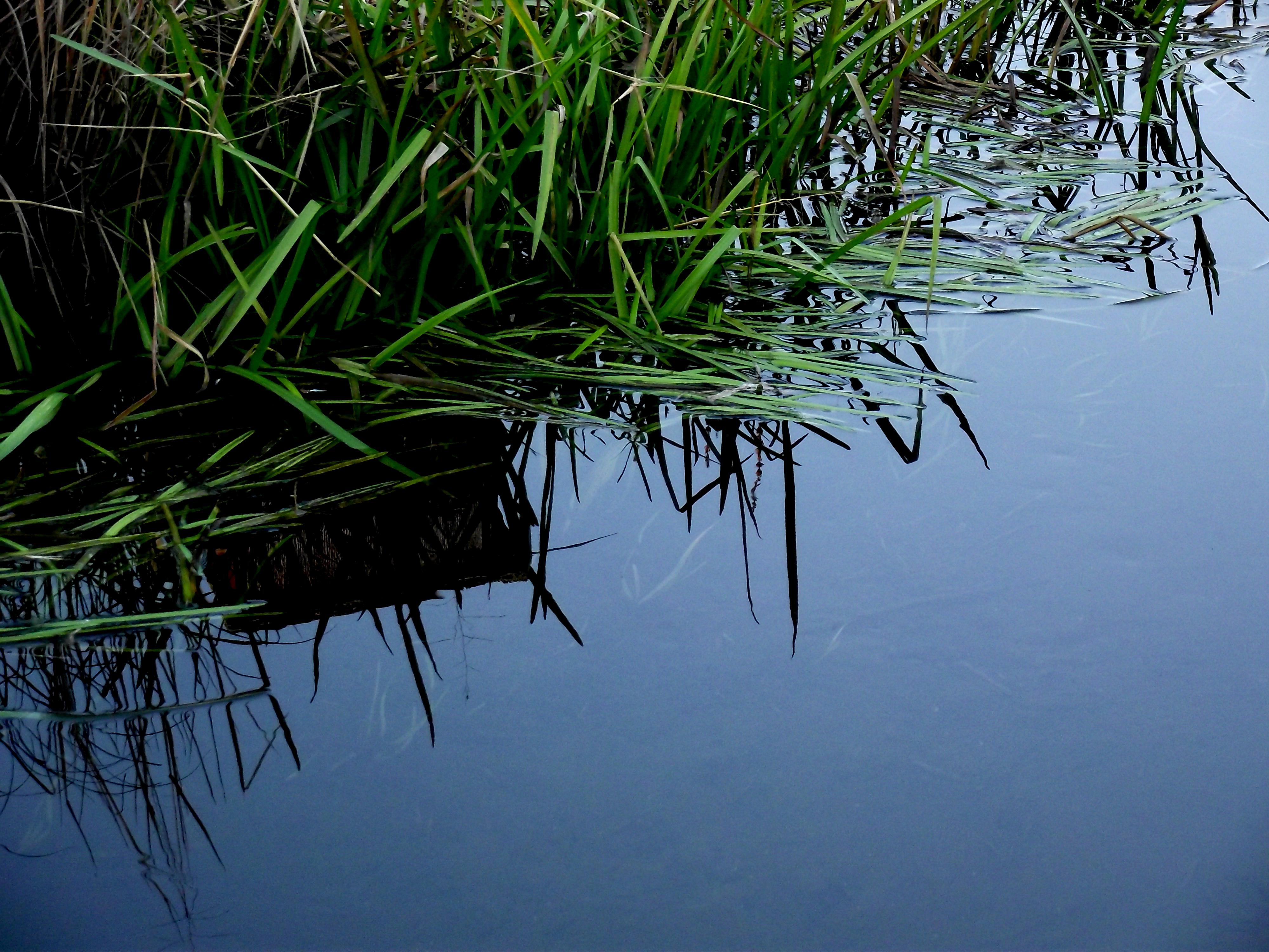 The Marsh, 2013