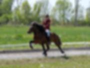 Claudia-König-HAT-Lechleite-2018-Tierfot
