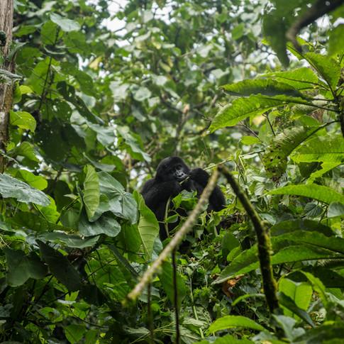 Baby Monkey - Has the world gone insane?