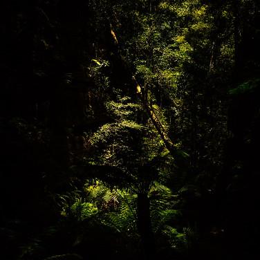 Forest Trek - Australia