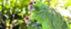 Perroquet MakiGo