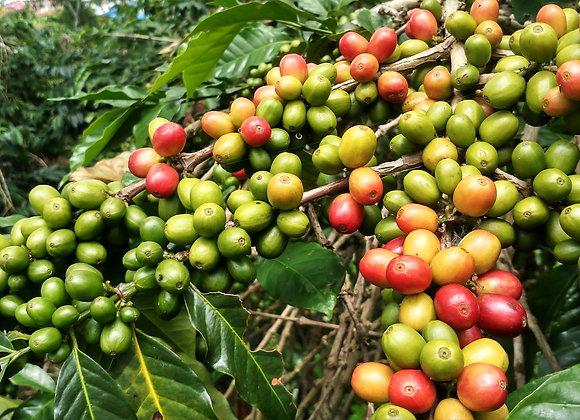 Roast to Post - Whole Bean Coffee (250gm)