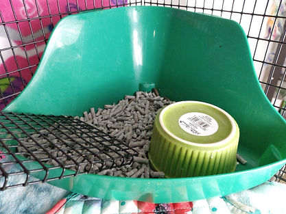 how to litter train pet rats