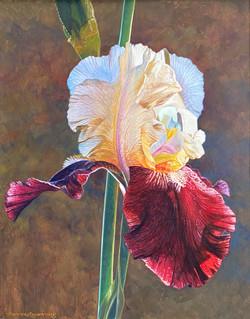 Majestic Iris