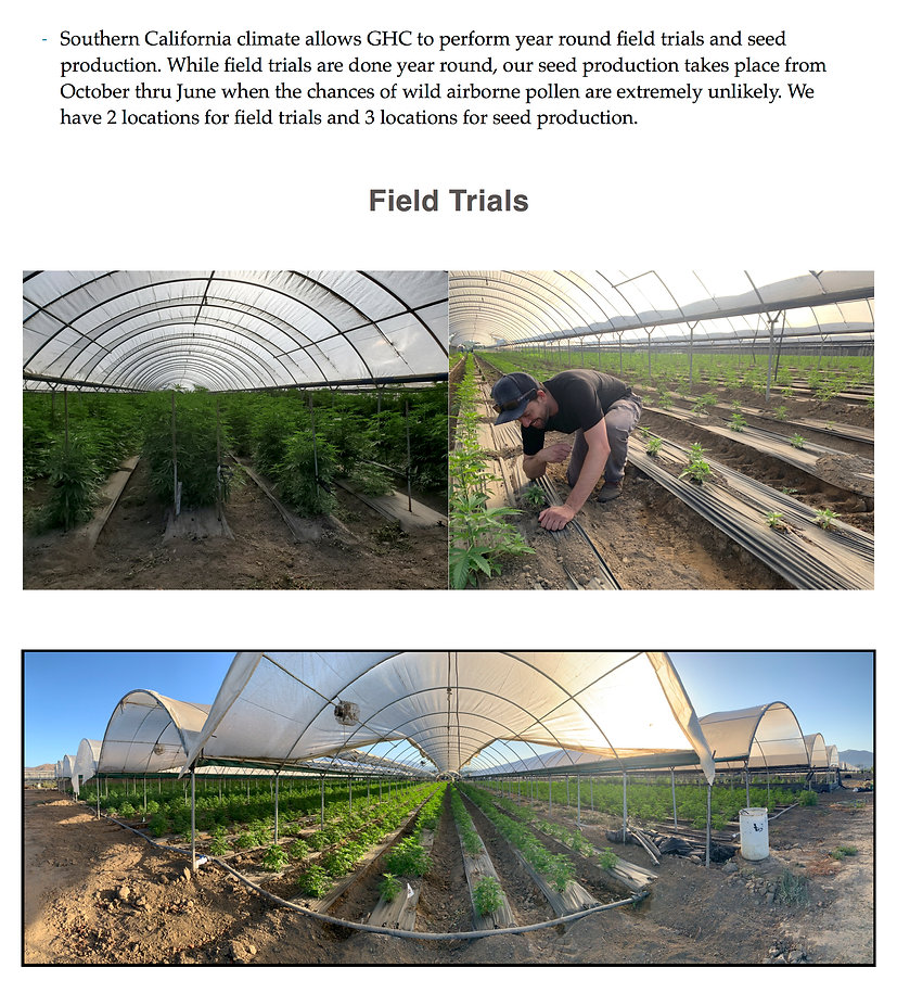 Field trials are year round with Global Hemp Collective's Southern California location.