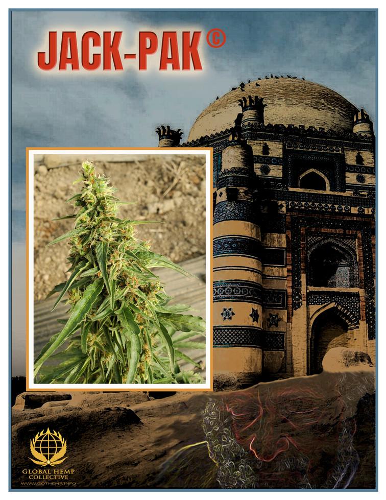 Jack-Pak-Info Pack pg 1.jpg