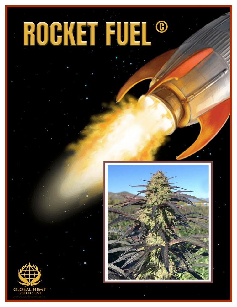ROCKET FUEL Info Pack pg 1.jpg