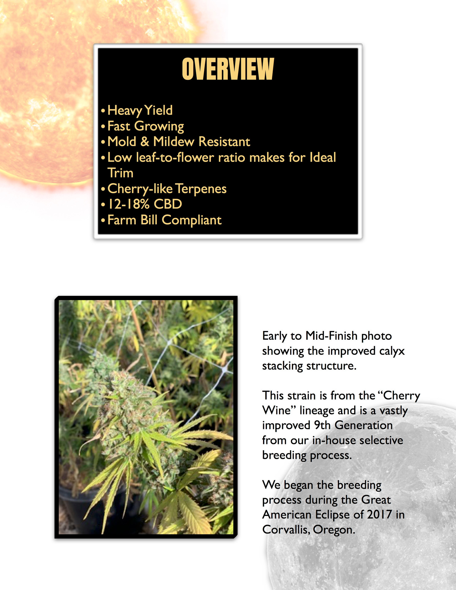 ECLIPSE InfoPack pg 2.jpg