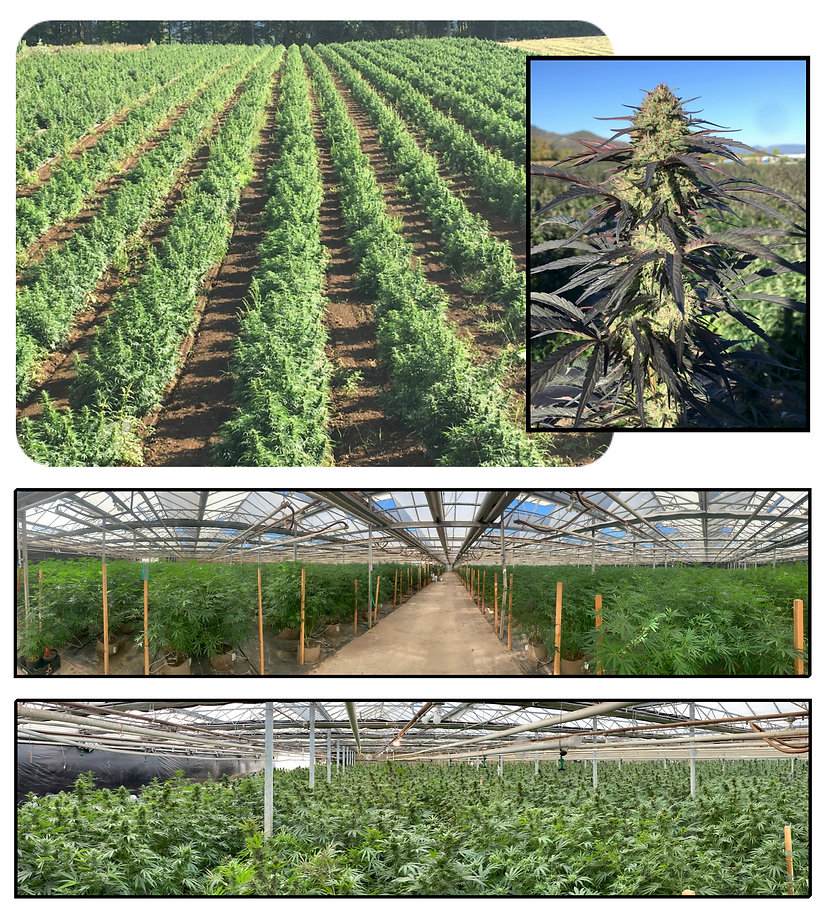 The seed production operatins of Global Hemp Collective in Oregon, USA.