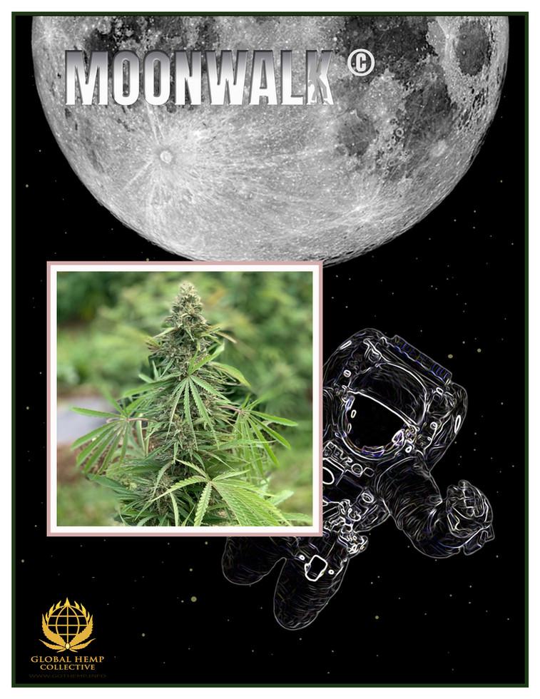 MOONWALK Info Pack pg 1.jpg
