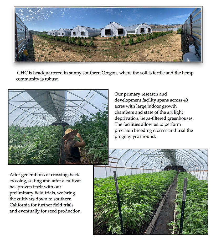 Global Hemp Collective headquarters in sunny Southern Oregon, where the soil is fertile and the hemp community is robust.