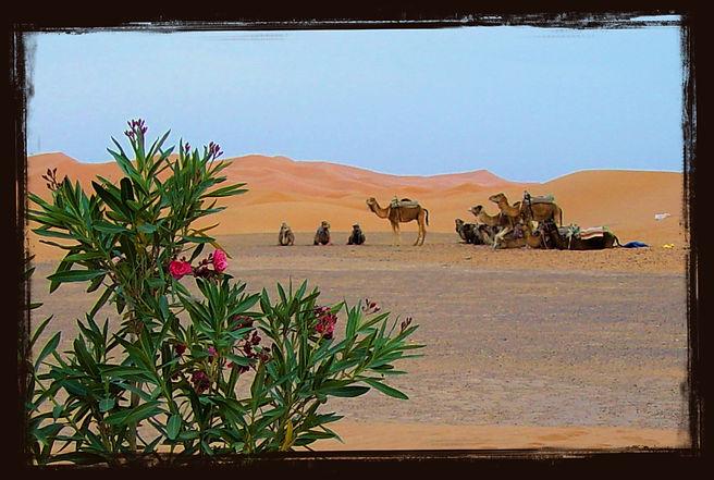 Ägyptische Wüste.jpg