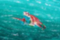 Island Time sample 6x9.jpg