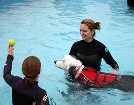 Canine hydrotherapy, dog swimming colchester