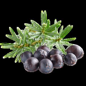 juniperus-communis_edited.png