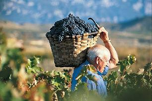 http---www.marquesdecaceres.com-wp-conte