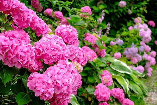 AdobeStock_321537272_Garden_1Kpx-min (1).png