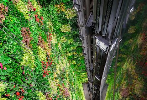 magnifique mur végétal vertiss.jpg