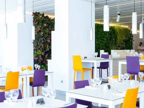 mur vegetal design - Acacia Silvi H Case