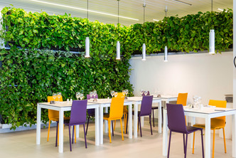 Mur végétal espagne - Acacia  H Caserio-