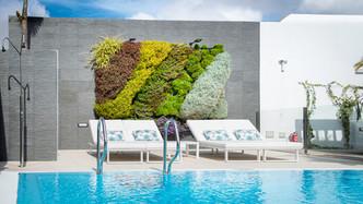 Mur végétal espagne - Acacia Silvi