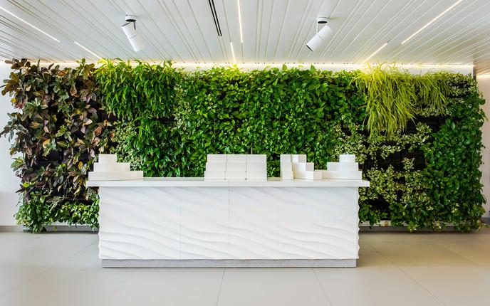 Mur végétal espagne - Acacia H Caserio