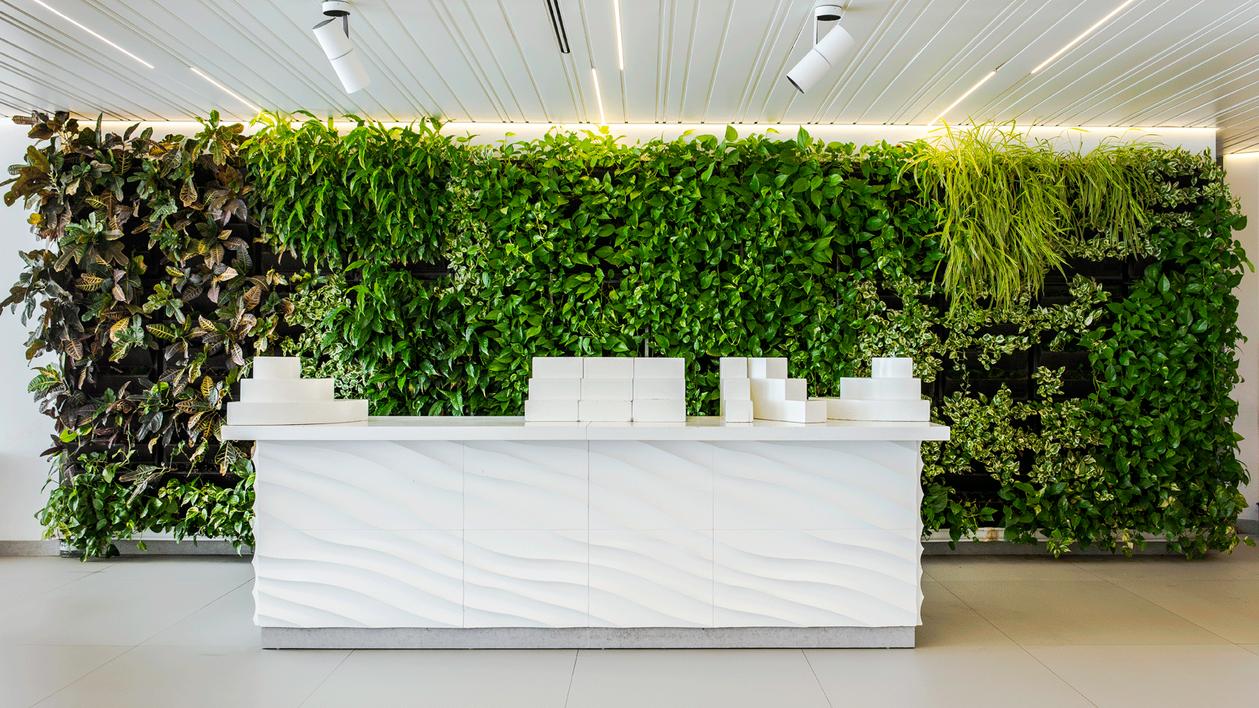 mur vegetal Acacia-H-Caserio-web.png